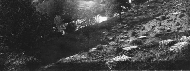 Cliquer pour agrandir la photo d'une coupe de faite sur le taillis de châtaignier; © Fonds Combescot, série 47FI, AD2